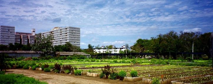 Fig_10_-_GENSCH_-_urban_agriculture_-_Cuba_(6519920773)