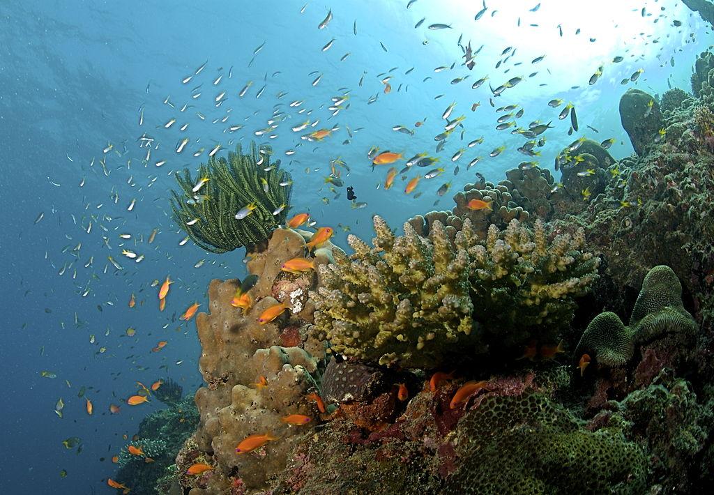 Koraalrif Andaman eilanden